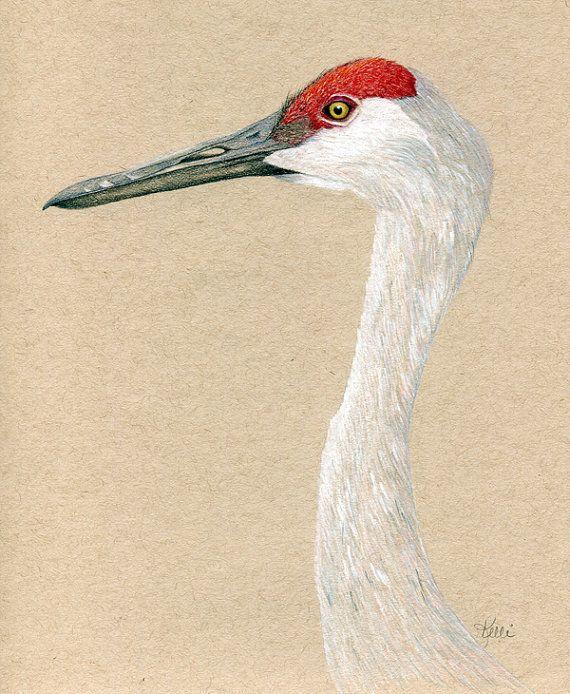 Sandhill Crane Bird Art Print - Colored Pencil Drawing ...  Sandhill Crane ...