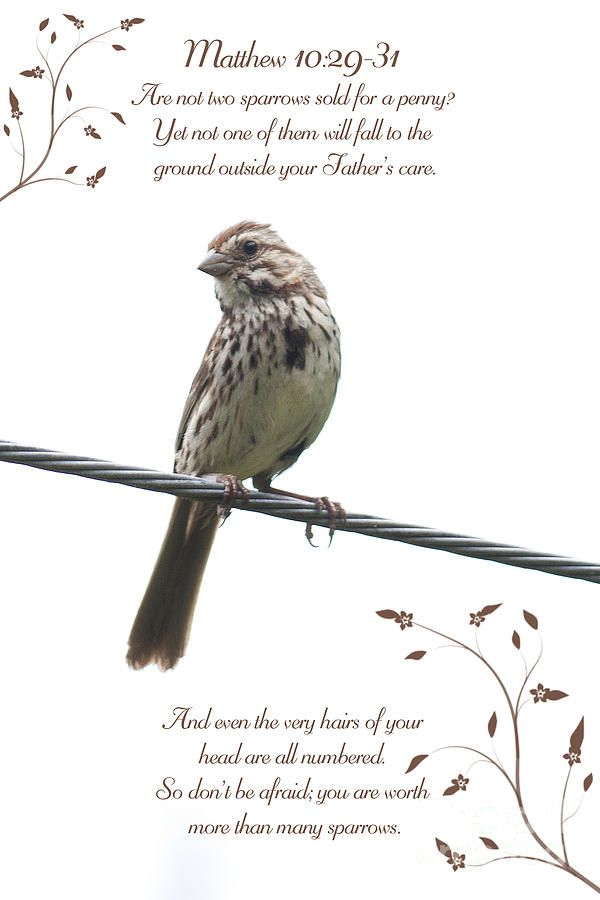Image Result For Sparrow Tattoo Biblical Meaning