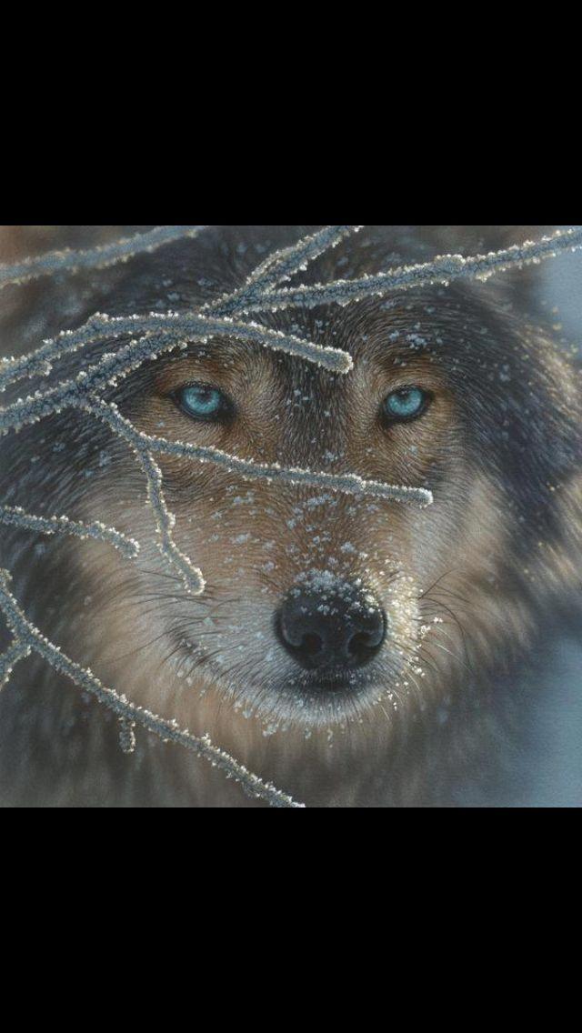Love it | Wolf | Pinterest | Lobos, El lobo y Ramones