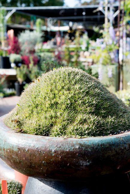 Terra Sol Garden Center   The Horticult