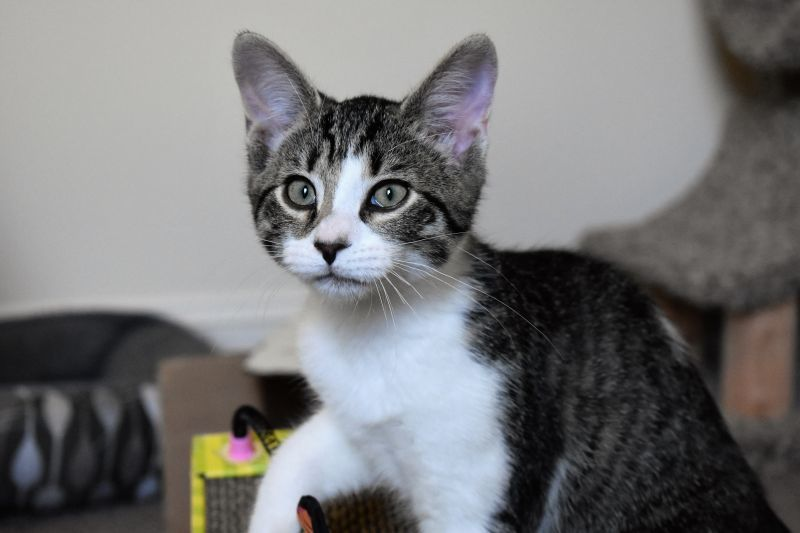 Adopt Kentucky Athens Ga On Petfinder Animal Society Animals Adoption