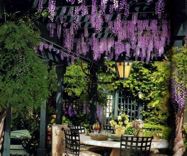 Pergola cover sun protection plants ideas wisteria mum   garden pinterest pergolas and canopy also