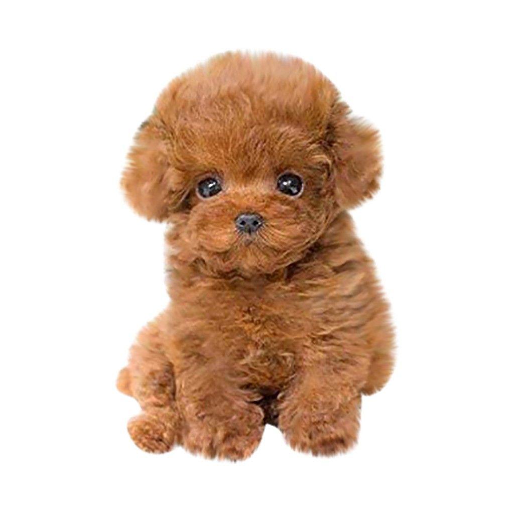 Tuscom Realistic Teddy Dog Lucky, Handmade Realistic Figure Toy Dog Plush Stuffed Anim