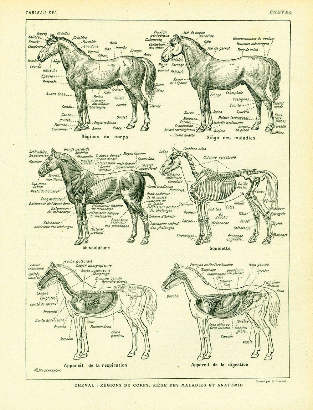 Wunderbar Vintage Anatomie Charts Galerie - Menschliche Anatomie ...
