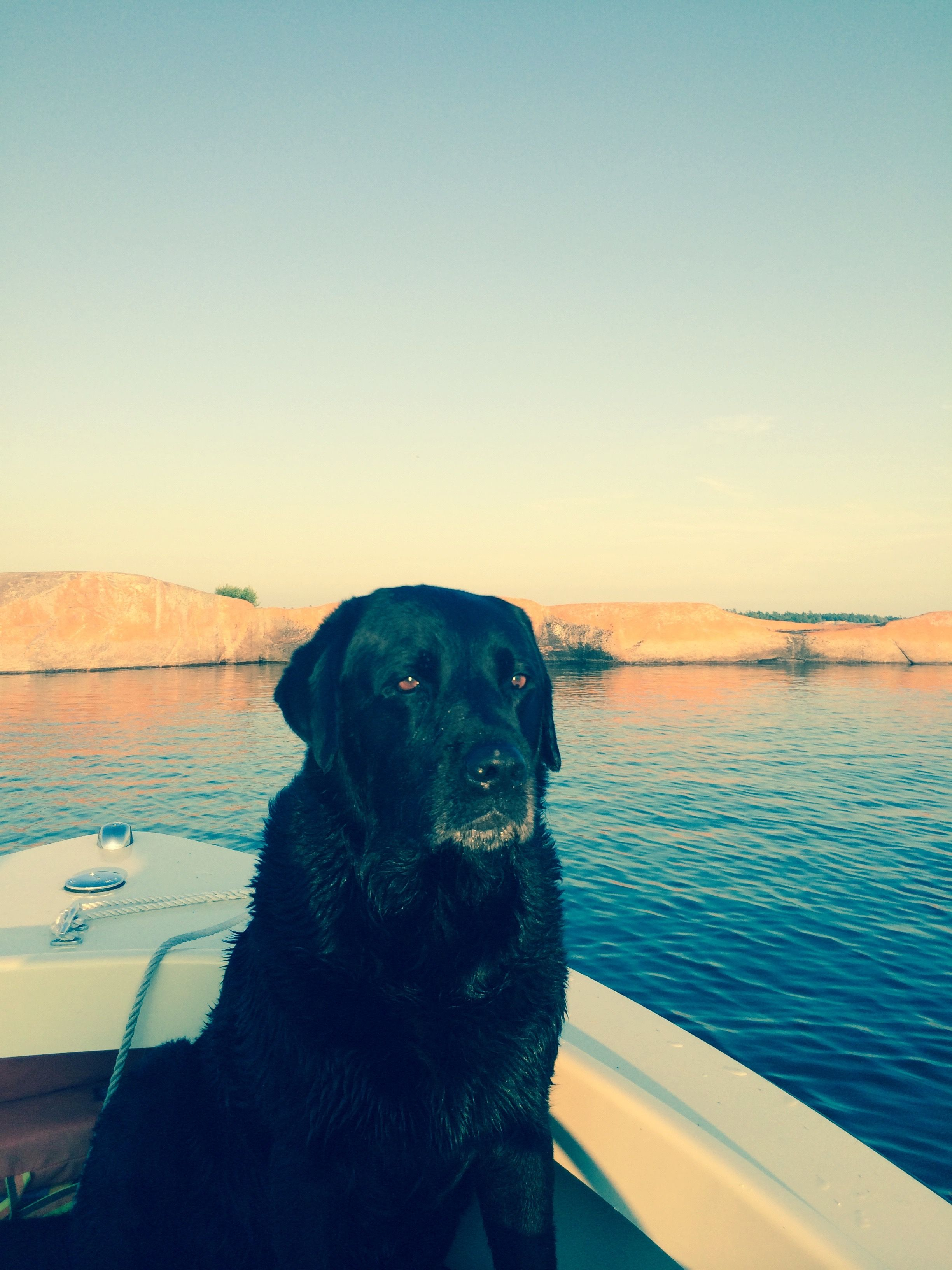 Our Labrador late afternoon near American camp island