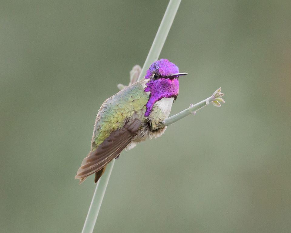 BirdSpotter 2014 - FeederWatch