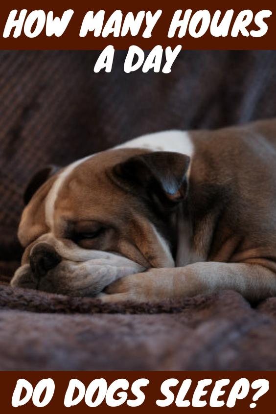 How Many Hours A Day Do Dogs Sleep Sleeping Dogs Dogs Big Dogs