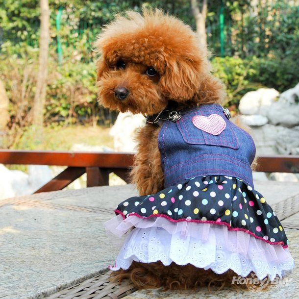 pets and their cute outfits | Cute Dogs with Clothes | Dog Houses ...