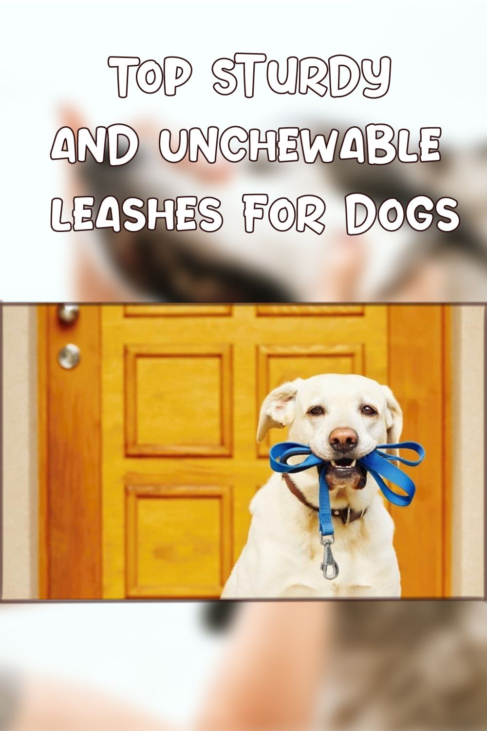 Best Dog Leash For Chewers Mypetguides 2020 In 2020 Dogs Dog