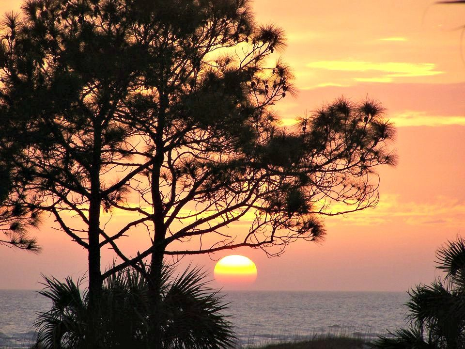 Pines and palms silhouetted against the setting sun, courtesy of Gulf Coast Vacation Rentals, http://www.beachguide.com/MexicoBeach/GulfCoastVacationRentals