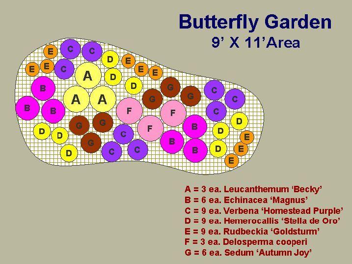 Butterfly Garden Design Plans | 31b1e7c112166fceccd2a83baee33f34