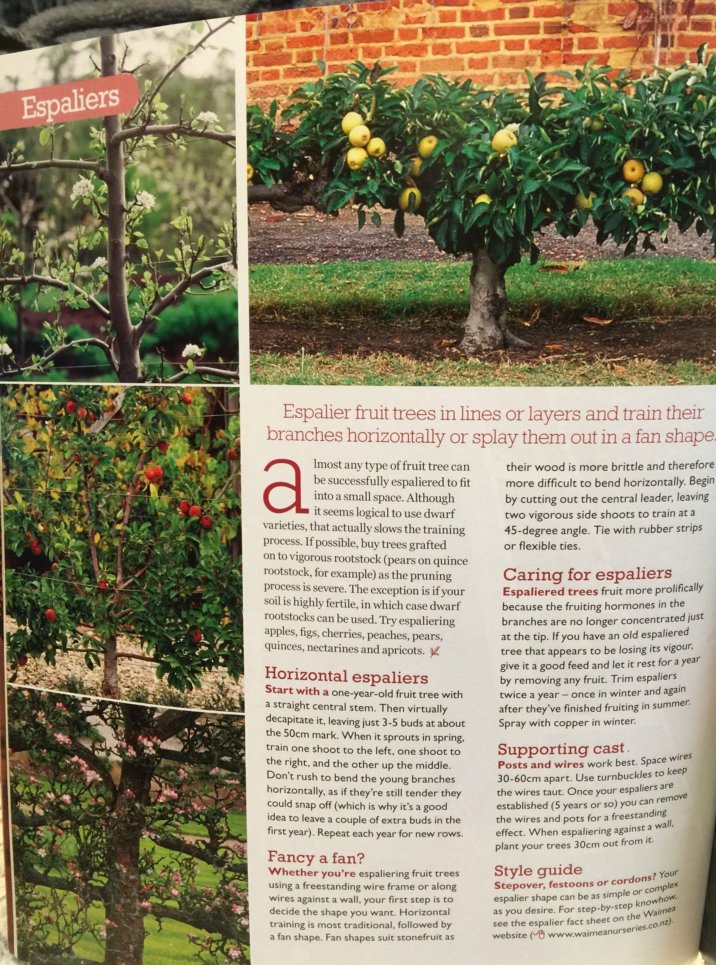 Espalier Tips Espalier Fruit Trees Fruit Trees Garden