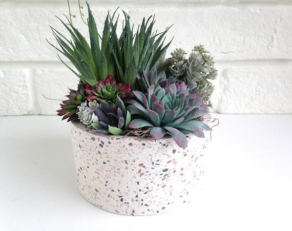 Succulent arrangement, modern Christmas, succulent