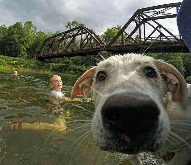 Selfie cachorro dog Instagram