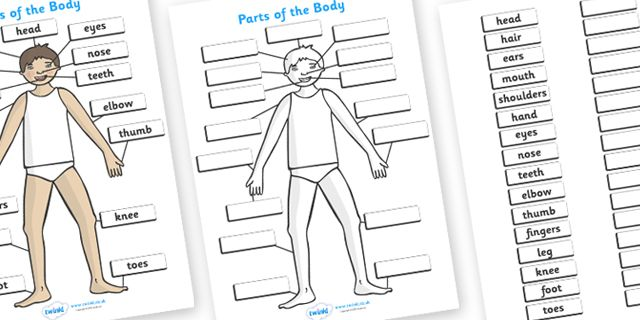 Twinkl resources parts of the body a4 printable resources for twinkl resources parts of the body a4 printable resources for primary eyfs ks1 and sen thousands of classroom displays and teaching aids ccuart Images