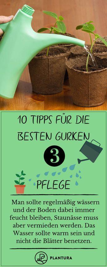 10 Tipps für die besten Gurken aus dem eigenen Garten - Plantura