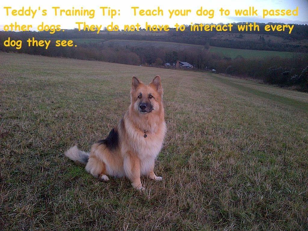 Dog Training Tips Dog Training Meme Dog Tips Dog Training Dog