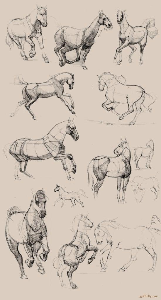 A interpretação mecânica dos movimentos e a visão cúbica dos volumes ajudam a desenvolver melhor os detalhes tridimensionais da anatomia - seja animal ou humana.  Olga griffinfly Drebas, horse studies and sketches