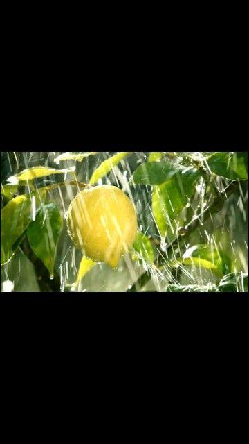 Rain benefits everything
