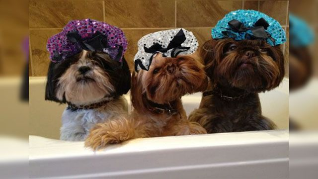 Just When You Thought Nobody Could Look Good In A Shower Cap