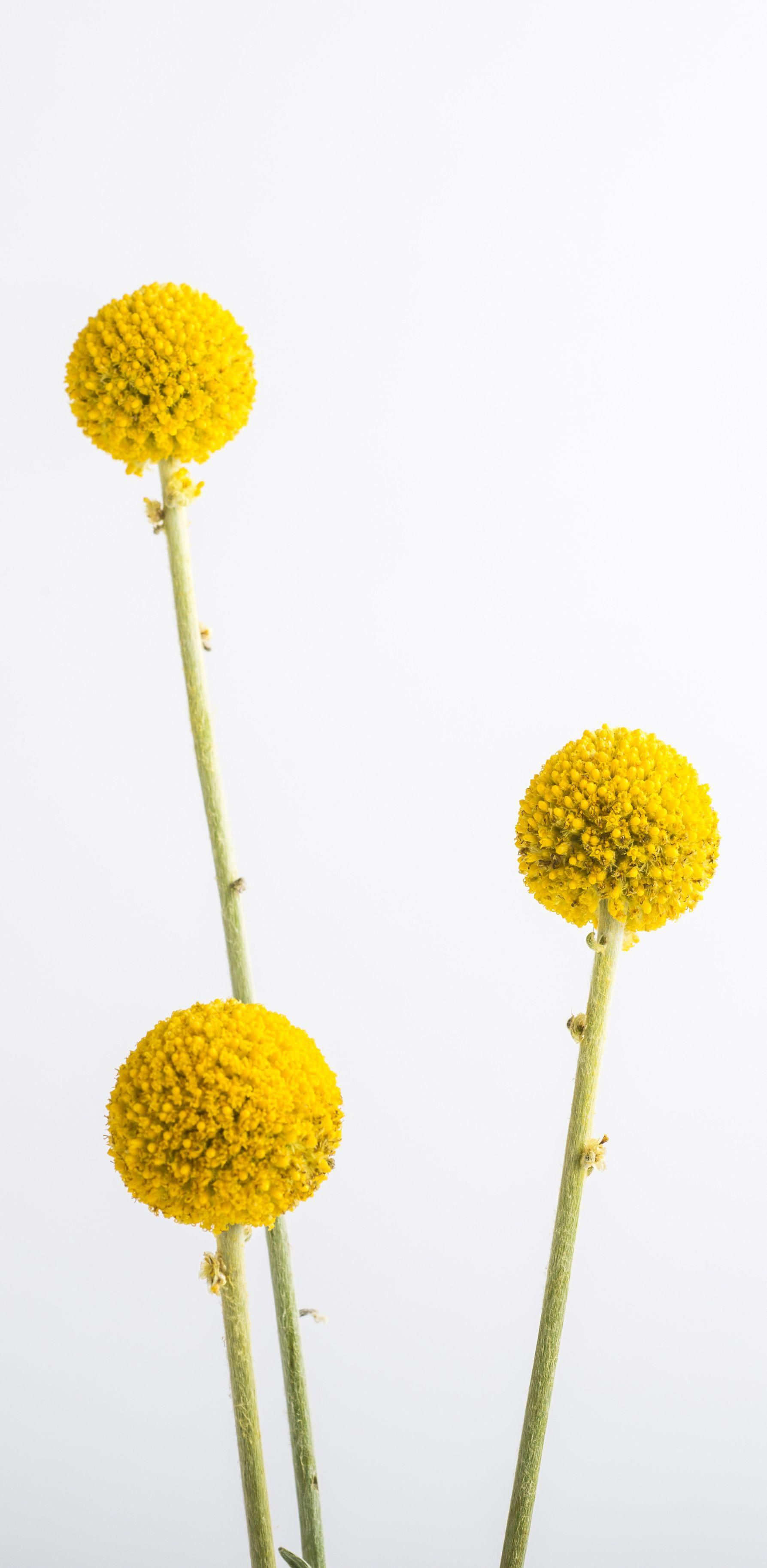 Yellow Flowers Commonly Evoke Feelings Of Happiness And Cheer Which