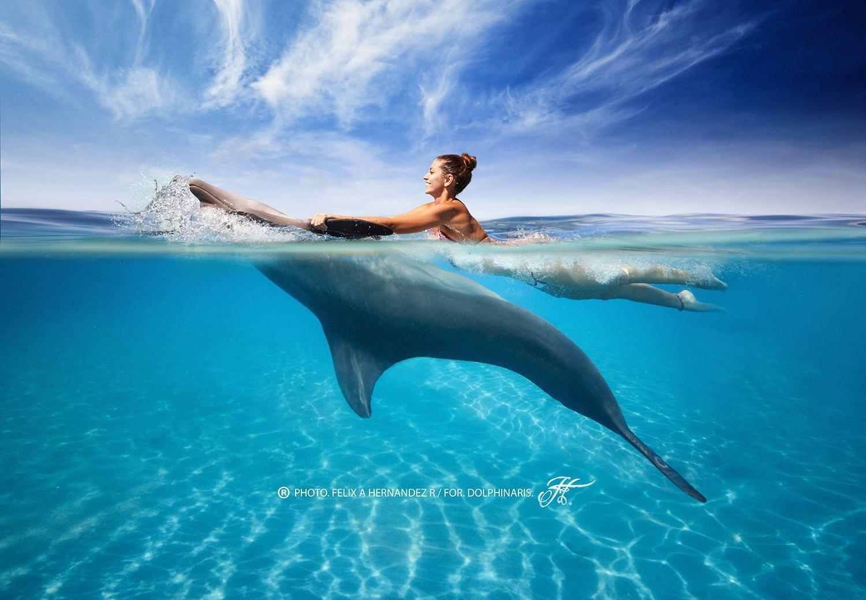 dolphins in the ocean wallpaper beth room pinterest animal