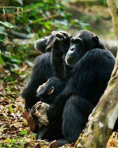 Jane Goodall   National Geographic Society