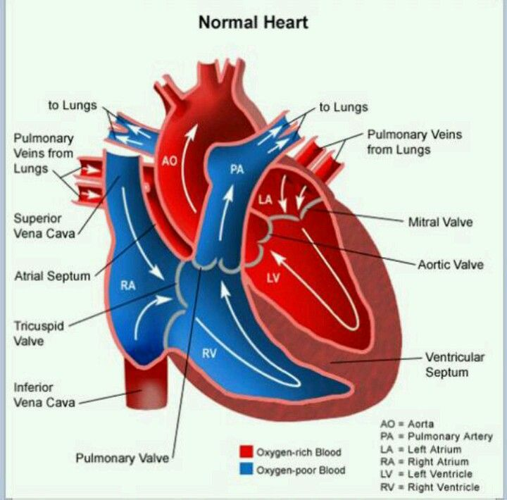 Blood Flow Through The Heart Nursing Pinterest Med School