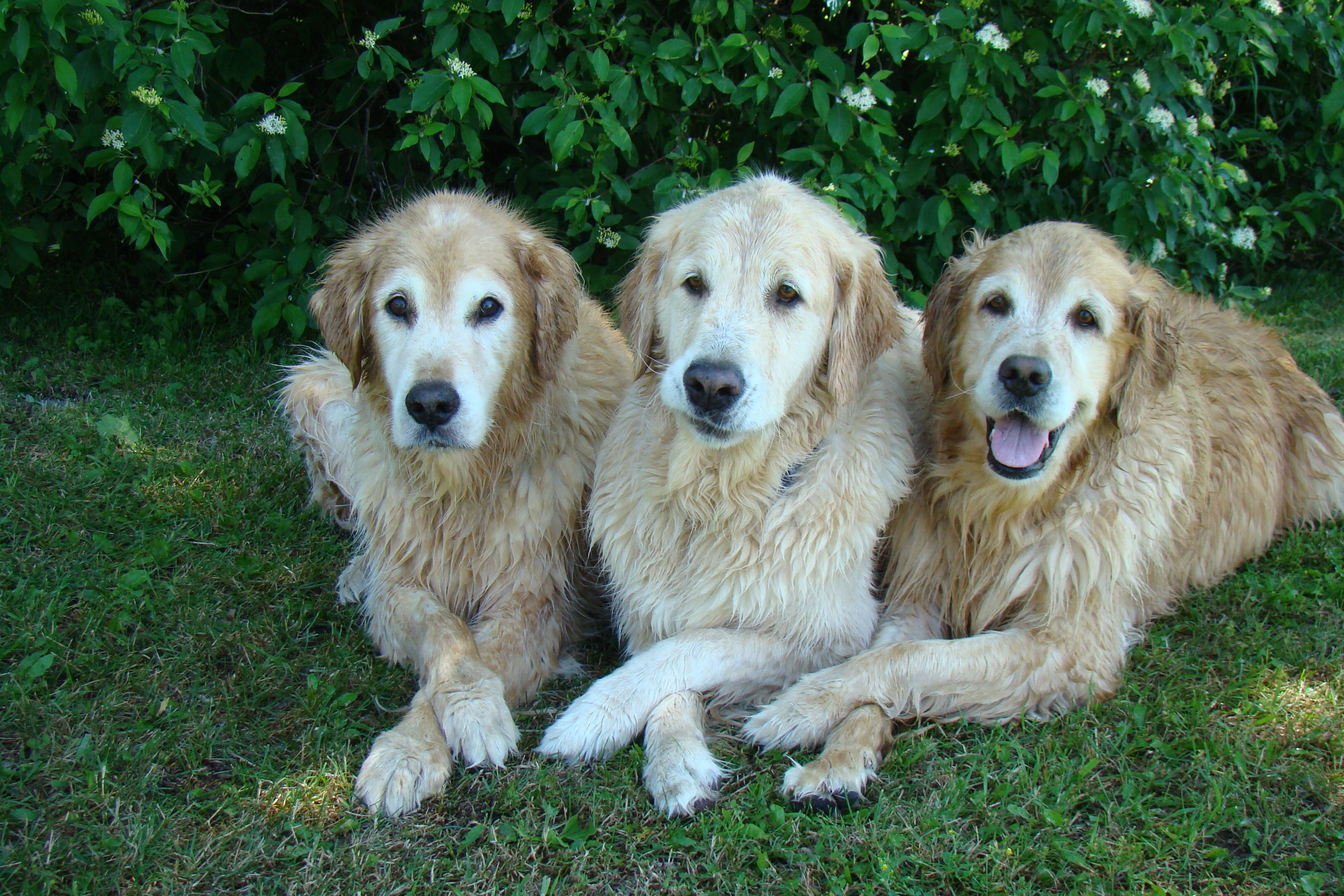 All Paws Crossed Most Beautiful Dog Breeds Best Dogs For