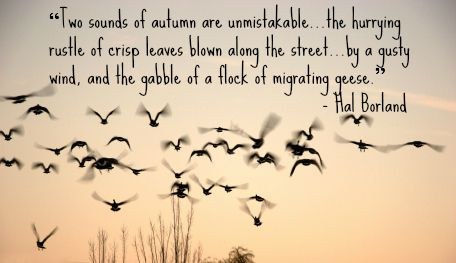 Amazing 14 Fabulous Fall Quotes: Wonderful Words For Autumn!