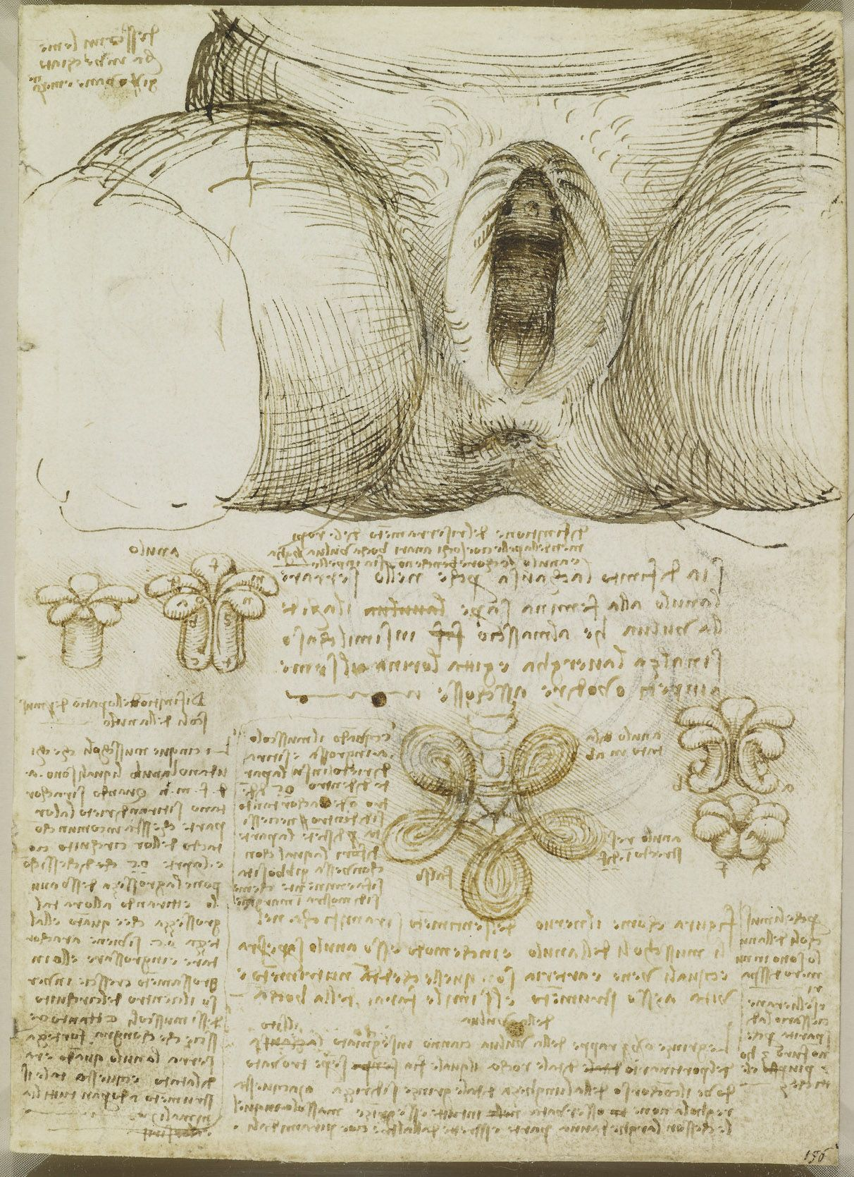 Recto: The vulva and anus. Verso: The male and female reproductive ...