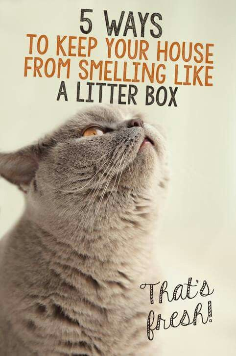 Keep Your House From Smelling Like A Litter Box