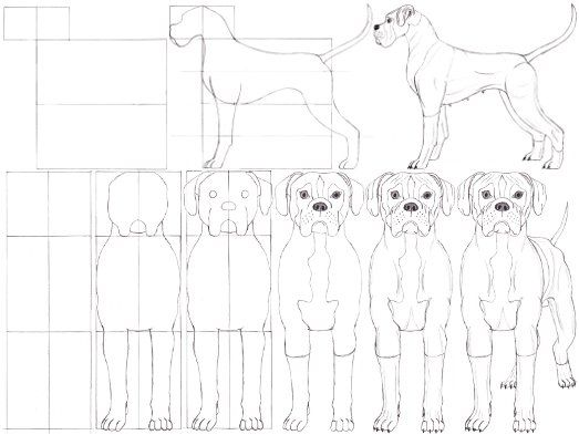 How to draw a dog boxer doodles pinterest dog drawings and how to draw a dog boxer ccuart Choice Image