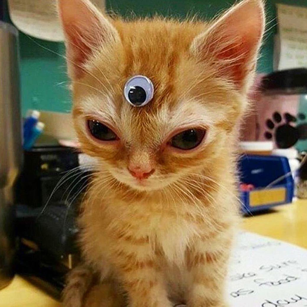 Cats Are Aliens Change My Mind In 2020 Funny Cat Memes Cute Kitten Gif Kittens Cutest