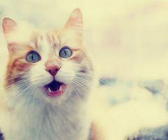 """Meooow""   Flickr – Condivisione di foto!"