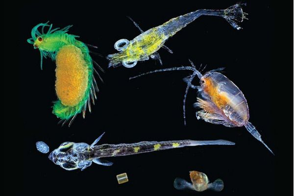 Scientists gather 'tremendous' new data on tiny ocean creatures