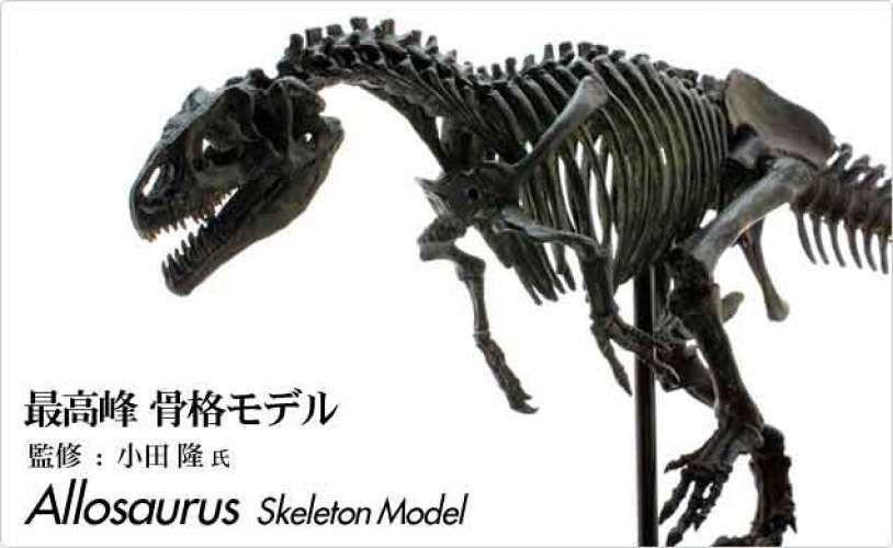 favorite allosaurus skeleton model 1 20 fds605 bk figure best art from japan favorite アロサウルス 恐竜 グッズ 恐竜