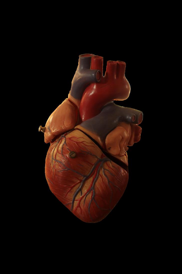 Pin On Anatomical Heart