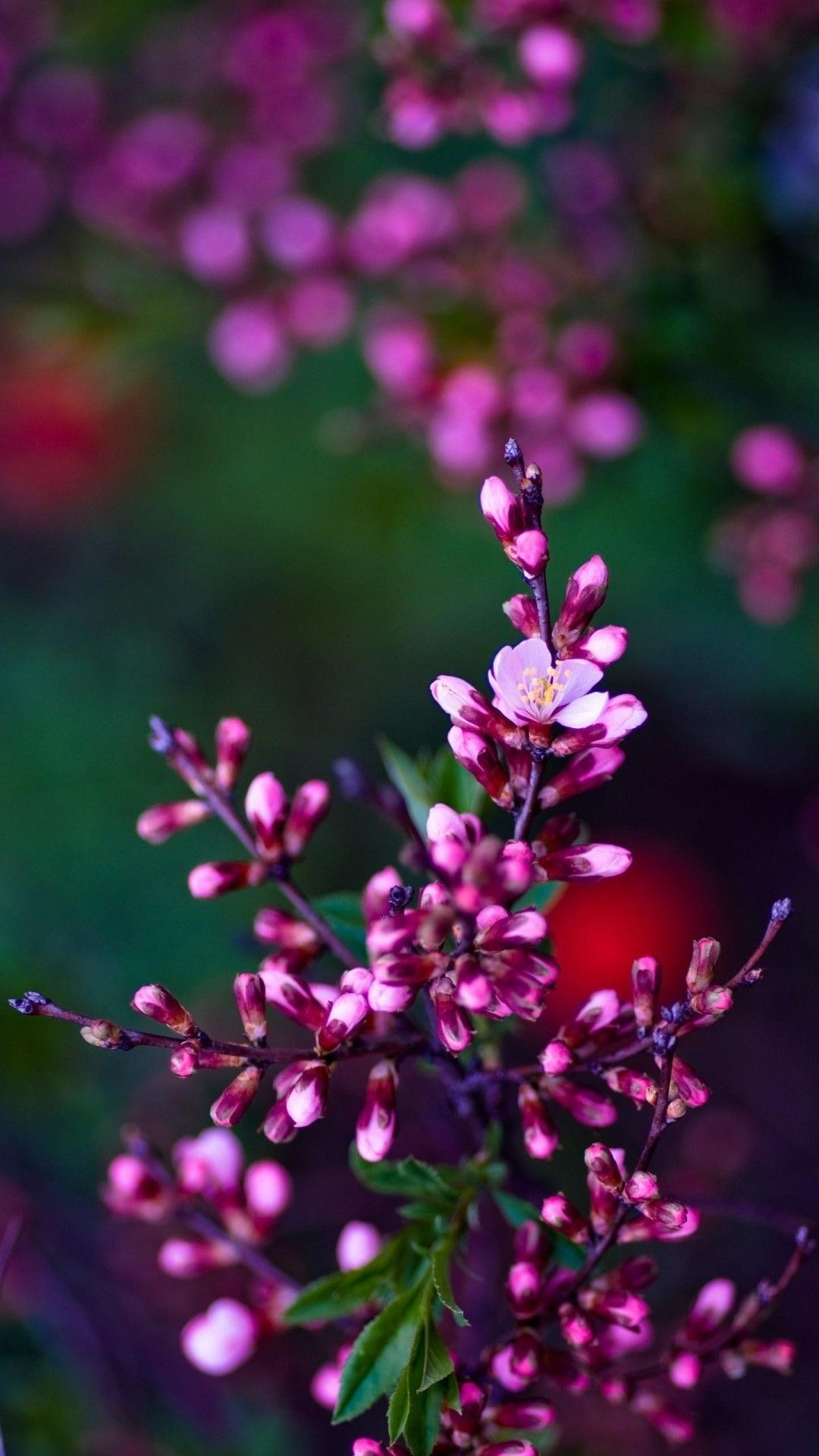 Cute Flower HD Wallpapers For Mobile Hd wallpapers for