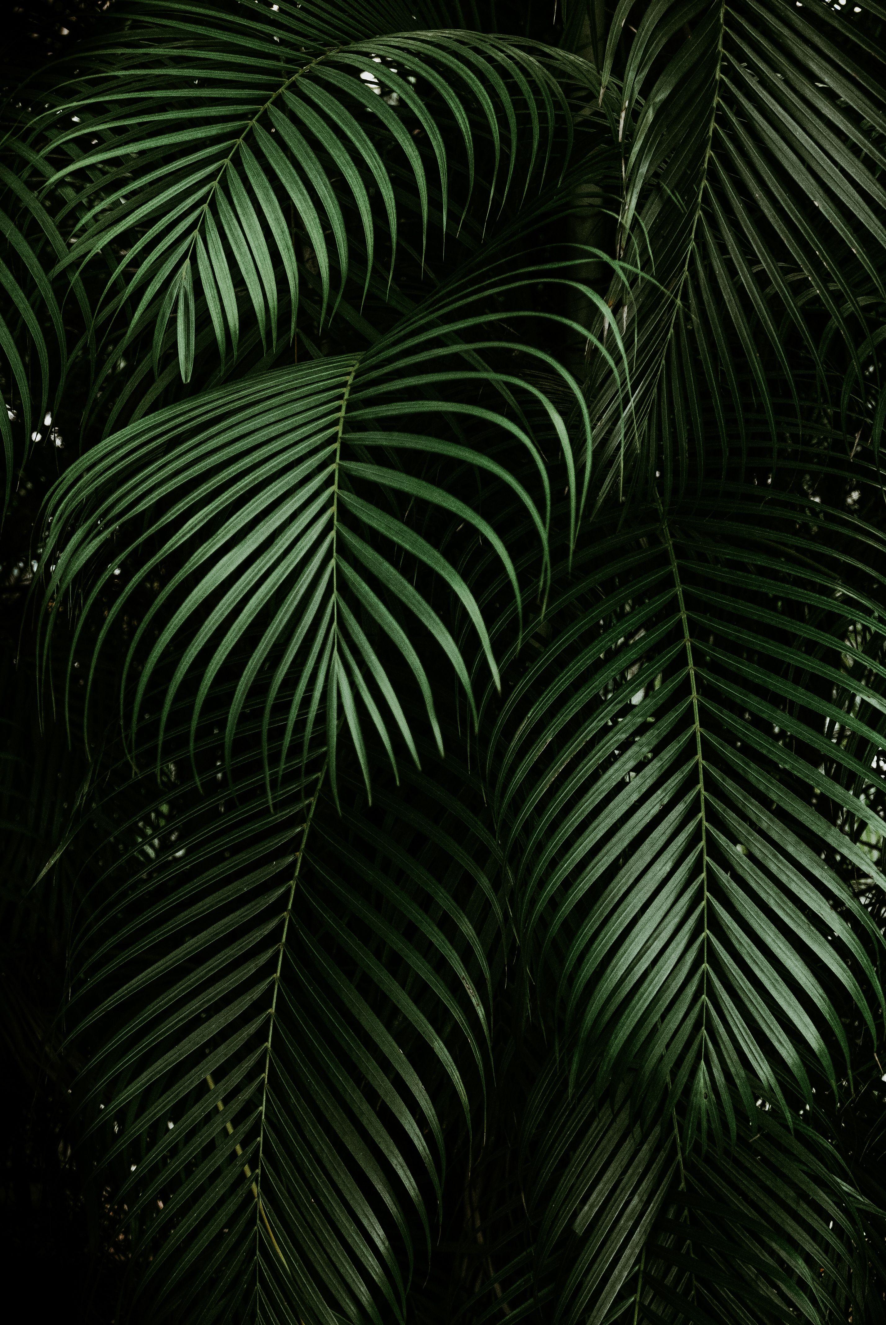 Tropical Greens Mobile Lightroom Preset Instagram Presets Etsy Green Leaf Wallpaper Leaves Wallpaper Iphone Leaf Wallpaper