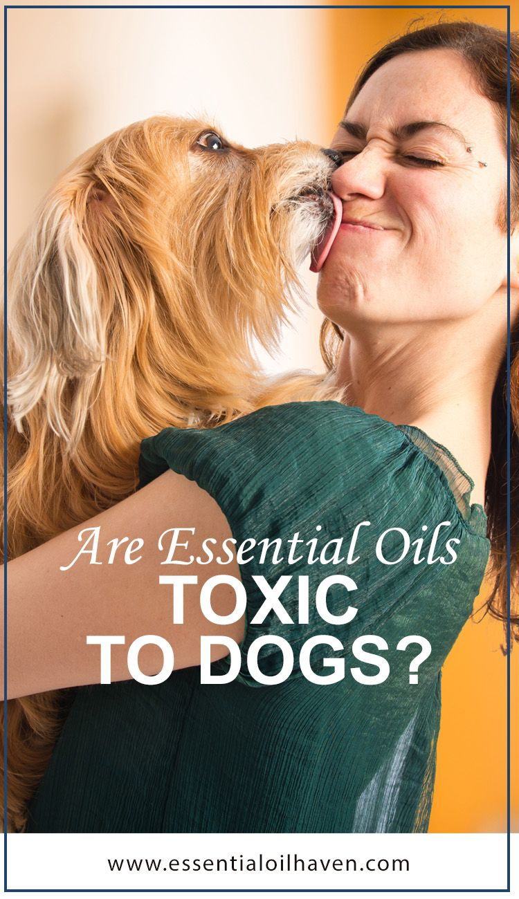 Are Essential Oils Toxic To Dogs Essential Oils Dogs Essential