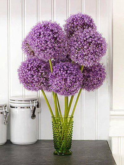 Won T Be In The New House In Time To Put A Vase Of Allium On My Counter This Year You Can Be Spring Flower Arrangements Flower Arrangements Spring Flowers