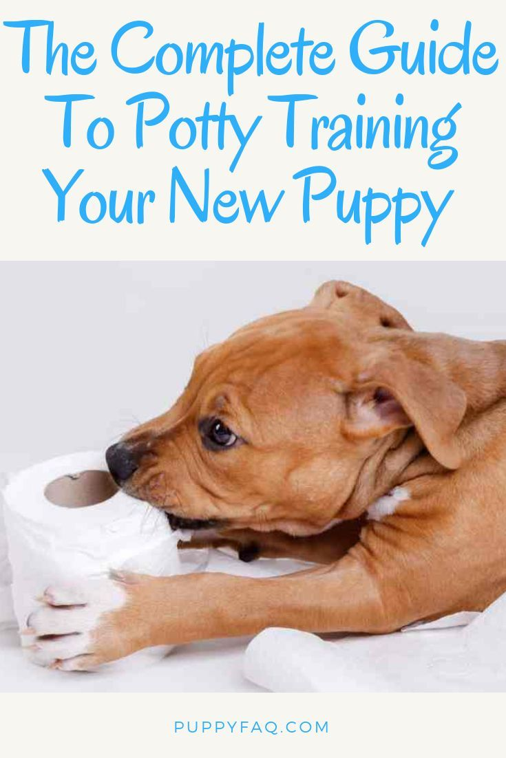 Potty training a puppy can be quite a challenge for new dog owners, especially when they work or live in an apartment. Will you use puppy pads or a fake grass patch? Crate training, a potty bell or special spray? Housebreaking a new puppy can bring all kinds of problems. This complete guide to potty training a new puppy will help you overcome them and hands you the best tips. #newpuppy