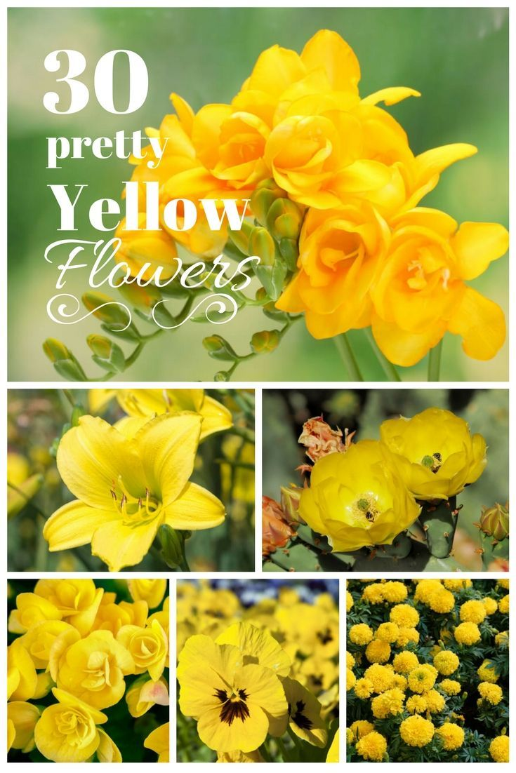 30 Vibrant Types Of Yellow Flowers For Your Yard A To Z Plants