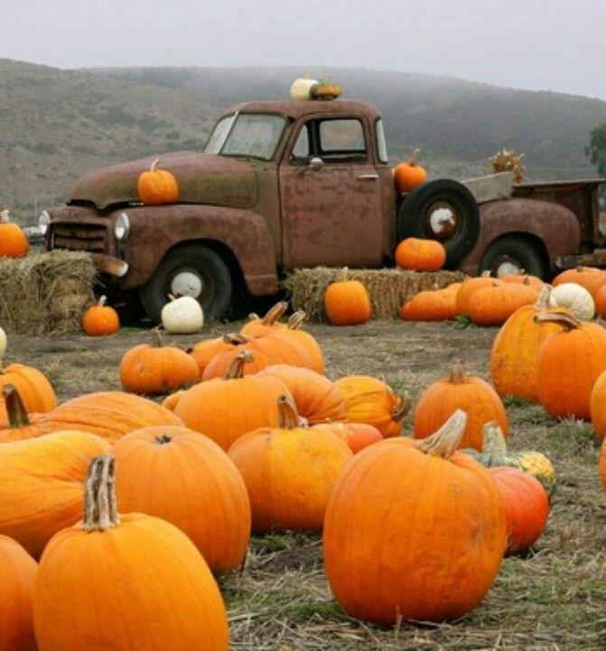 Pumpkins Pumpkin Wallpaper Pumpkin Patch Fall Pumpkins