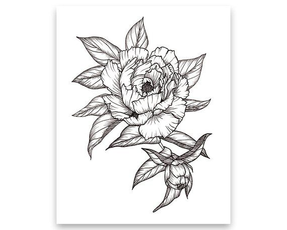 da2dab5b0 Peony Floral Arrangement, Art PRINT of Pen Illustration, Flower Drawing,  Floral Tattoo,