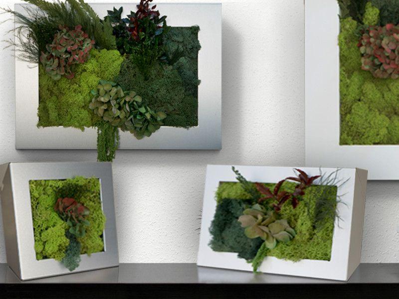 Musgo cuadro jardin jardin vertical plantas estabilizadas for Decoracion hogar tendencias