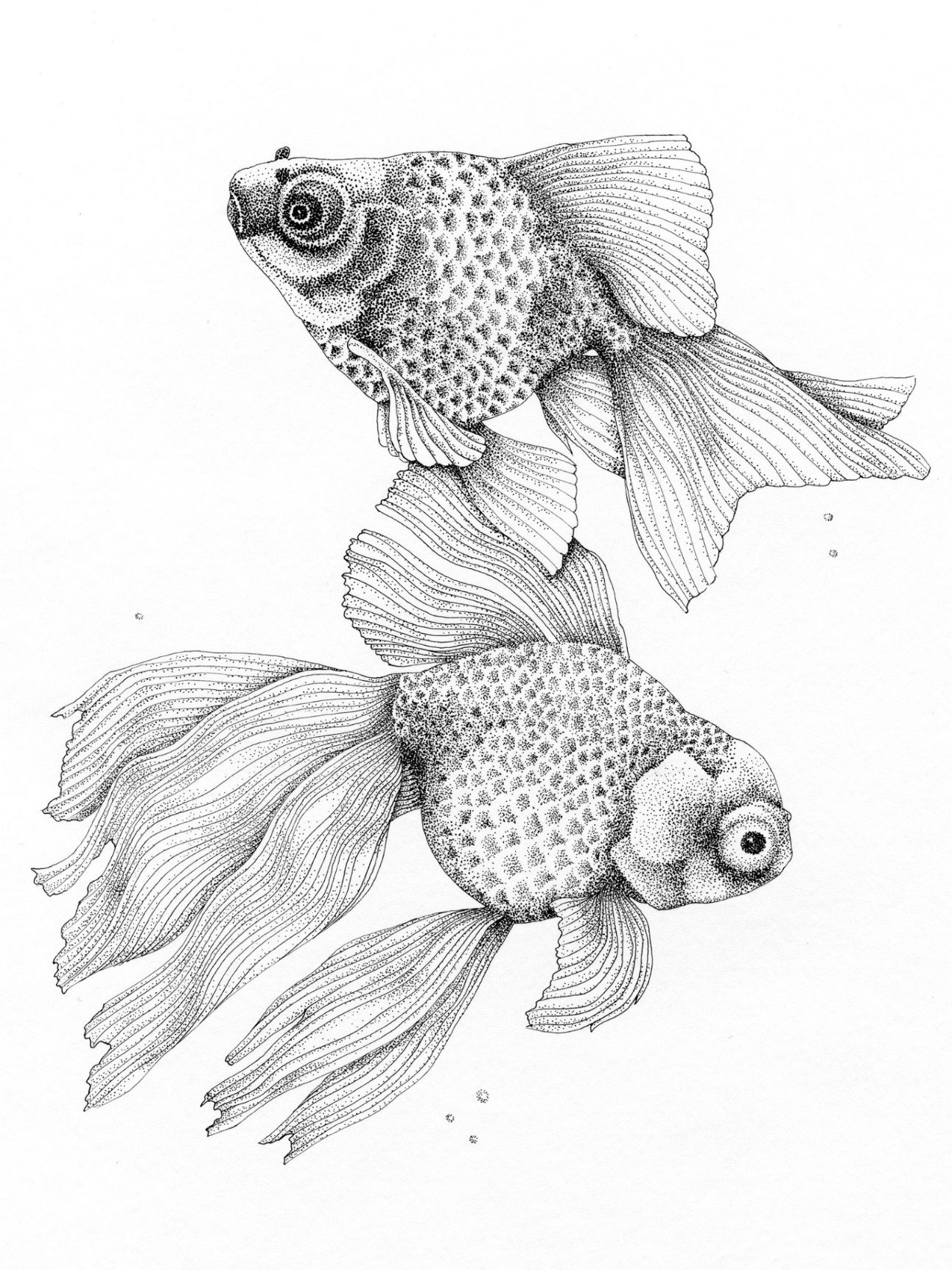 Ink Drawing Showing Some Of My Favourite Fancy Fish A Veil