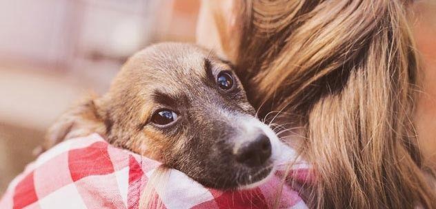 How To Organize A Local Pet Adoption Event Emotional Support Animal Pet Adoption Event Pet Trainer