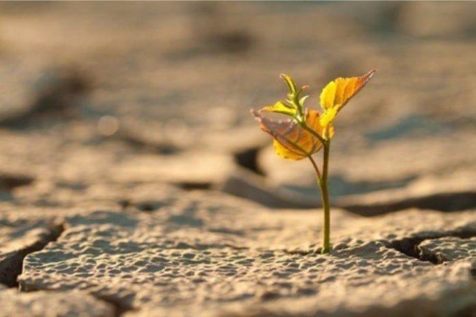 El alarmante ritmo de extinción de las plantas, otra mala noticia ambiental